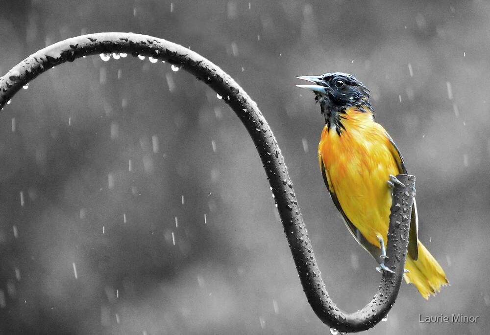"""I'm singin' in the rain....""  :) by Laurie Minor"