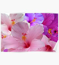 HIBISCUS  (CARD) Poster