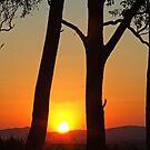 Stockinbingal Sunset by GailD