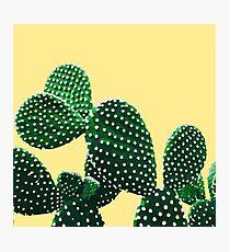 Lámina fotográfica Jardín de Cactus (amarillo)