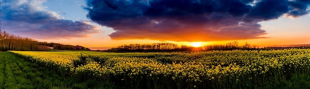 The Rapeseed sunset by philpace