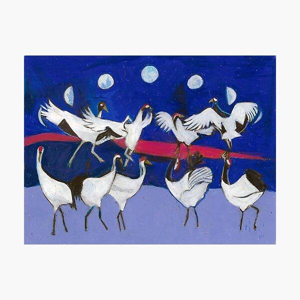 Nine Dancing Cranes Photographic Print