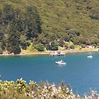 Safe Harbour.......Great Barrier Island....!! by Roy  Massicks