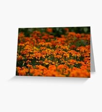 Sea of Marigolds Greeting Card