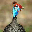 THE HELMETED GUINEAFOWL by Magriet Meintjes