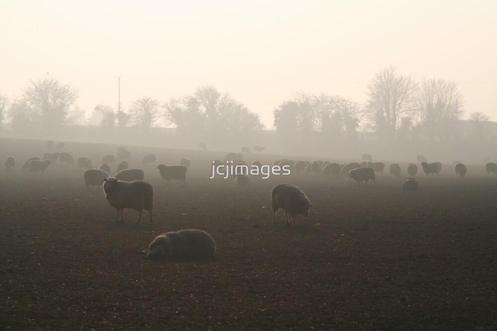Frozen Sheep by jcjimages