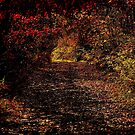 A walk down a lane in the fall by jammingene