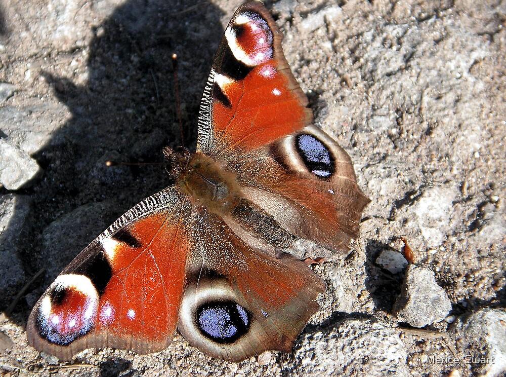 Basking Butterfly by Merice  Ewart-Marshall LFA