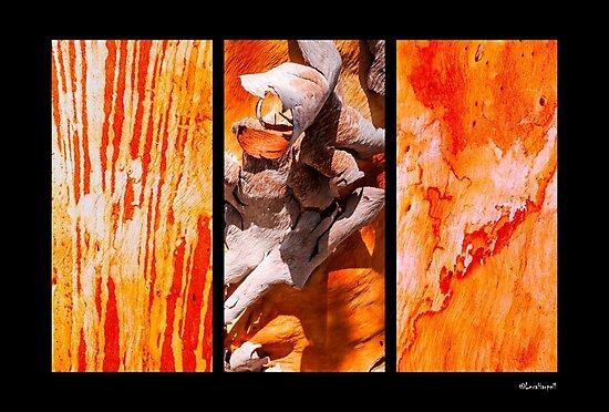 Salmon Gum Tree Bark Colours by Lexa Harpell
