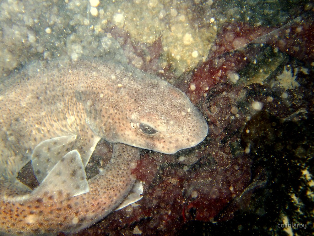 dog fish by colinlarby