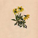 Lake Louise Arnica-Vintage Print-North American Wild Flower-Art Prints-Mugs,Cases,Duvets,T Shirts,Stickers,etc by Robert Burns