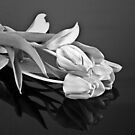 Tulips are Beautiful in Black and White by Sherry Hallemeier