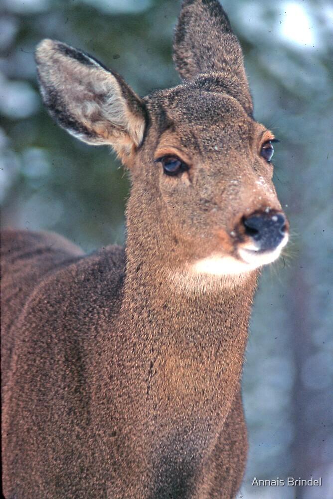 bambi by Annais Brindel