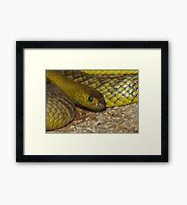 The Worlds Deadliest Land Snake. Framed Print