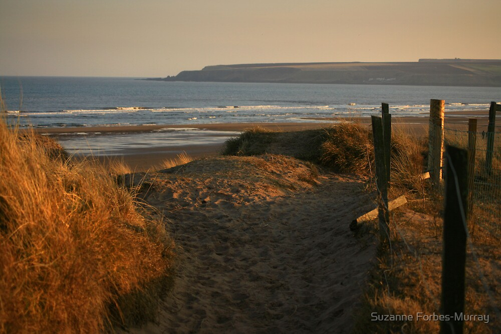 Down to Lunan Bay by Suzanne Forbes-Murray