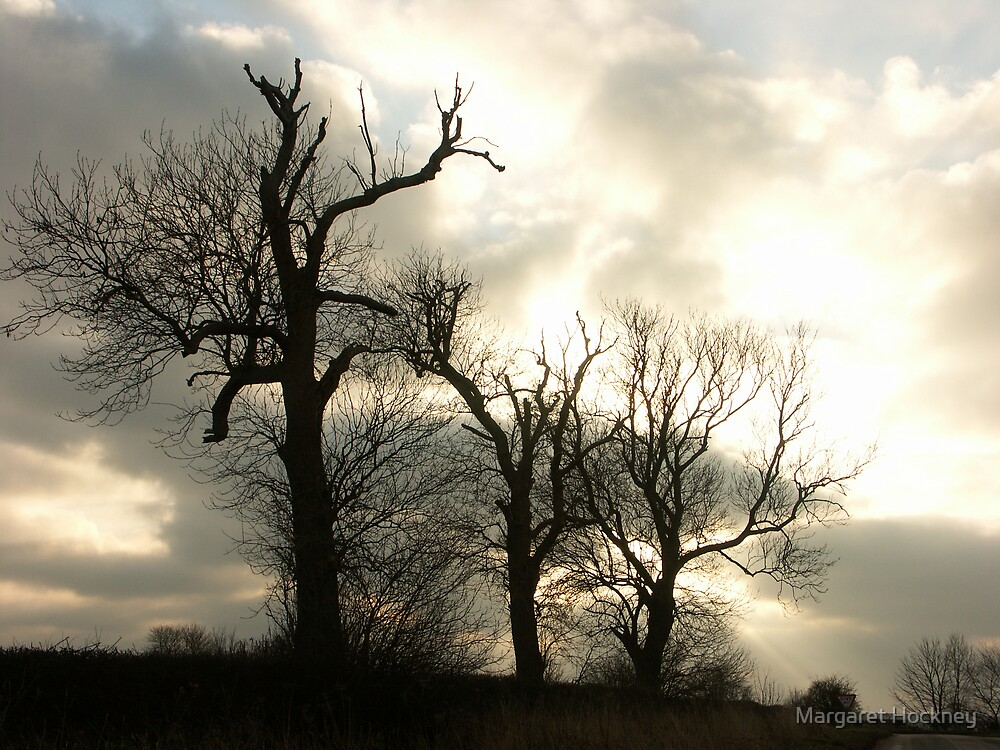 Winter trees on the Yorkshire Wolds. by Margaret Hockney