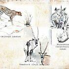 Lodge décor - Wildlife Triptych by Maree Clarkson