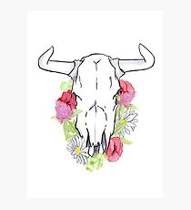 Cow Skull and Clover Photographic Print