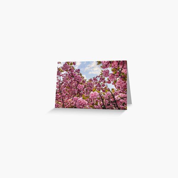 Sakura flower blossom in springtime Greeting Card