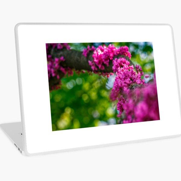 Judas tree blossom in springtime Laptop Skin