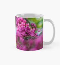 Judas tree blossom in springtime Mug