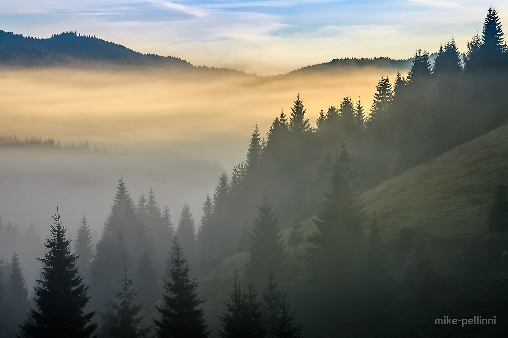 pine forest in fog at sunrise by mike-pellinni