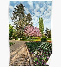 Sakura tree blossom city park Poster