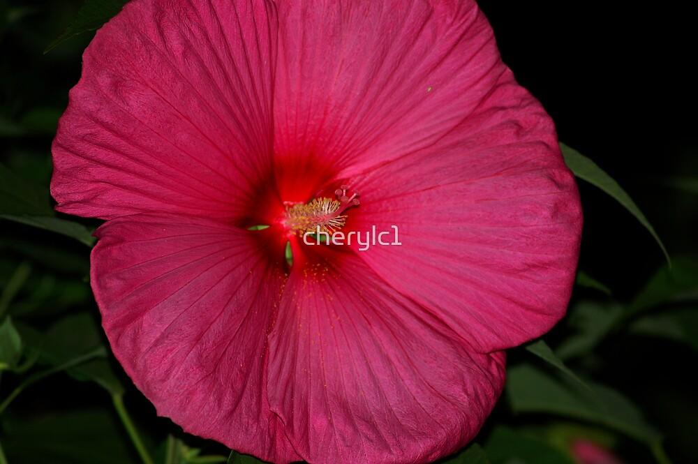 Bev's Flower by cherylc1