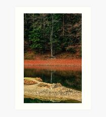 spruce forest on the lake in mountains Art Print