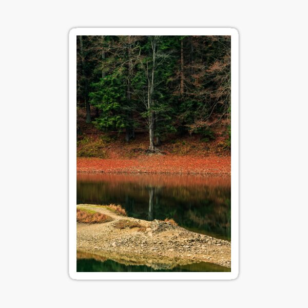 spruce forest on the lake in mountains Sticker