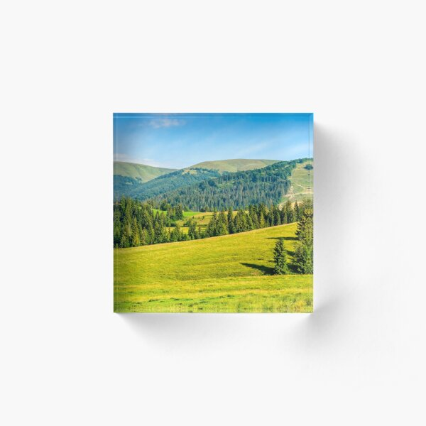 spruce forest in summer landscape Acrylic Block