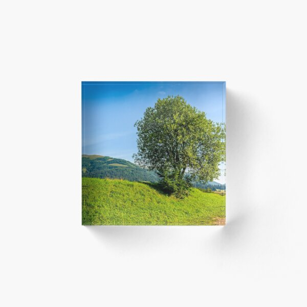 tree in rural area on beautiful summer day Acrylic Block