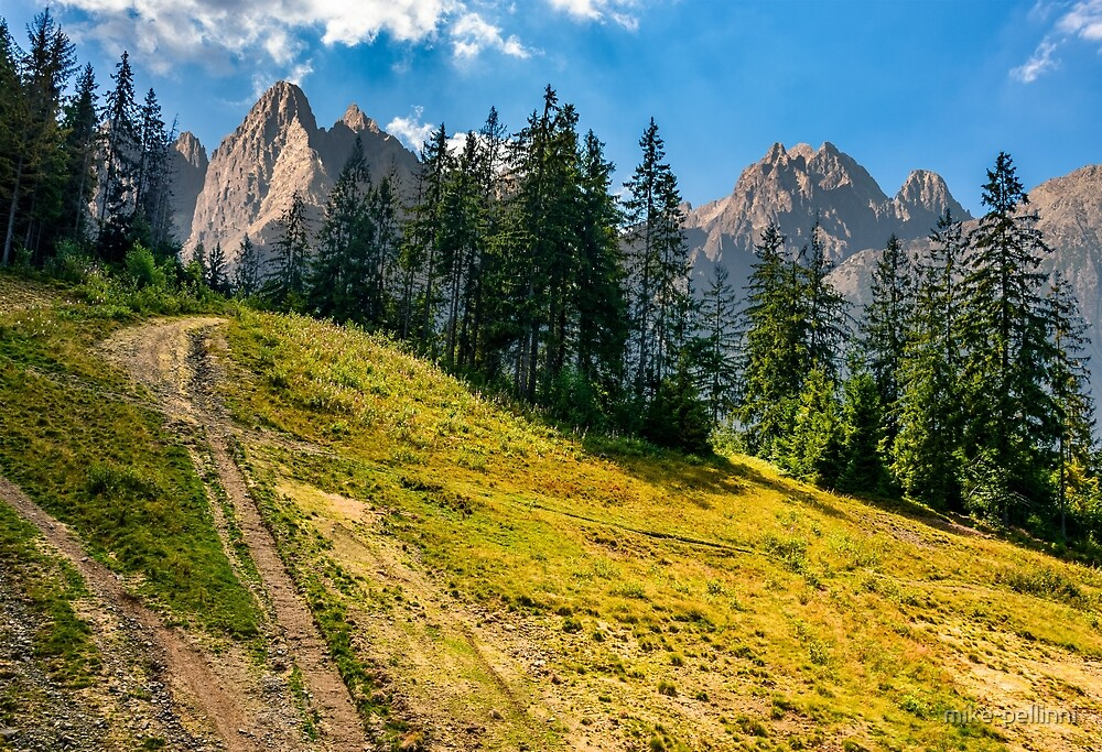 Spruce forest on a hill in High Tatras by mike-pellinni