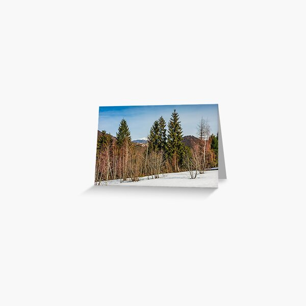 spring has sprung in mountain forest Greeting Card