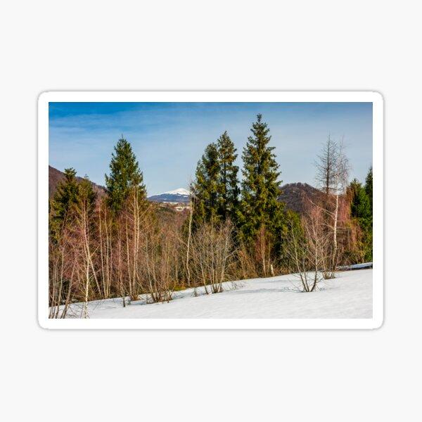 spring has sprung in mountain forest Sticker