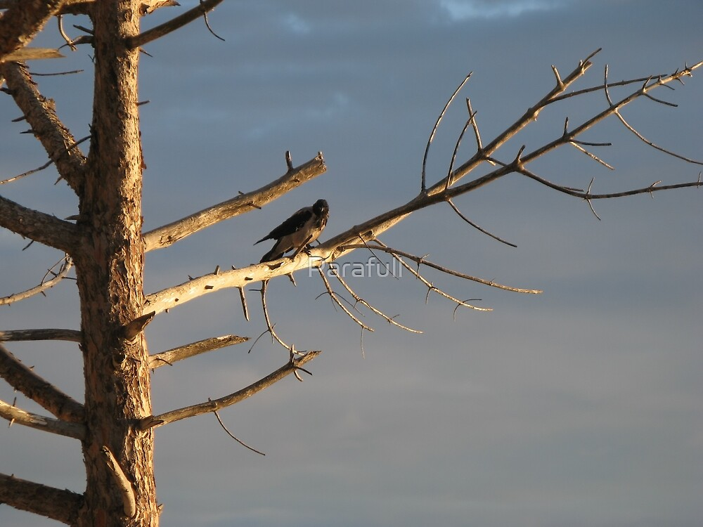 Crow on the dry tree by Parafull