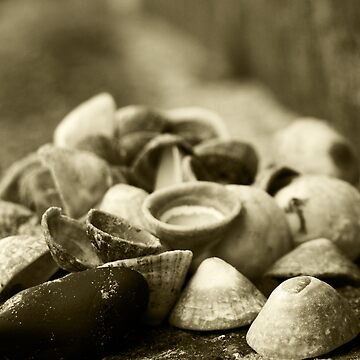 Shells by MrConkers