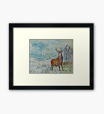 Highland red deer / stag in the snow Framed Print