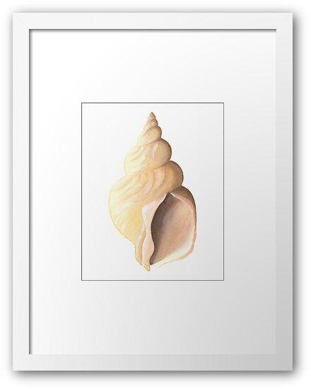 Whelk sea shell a watercolour study by LisaLeQuelenec