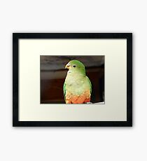 Are You Sure About That? - Female King Parrot - NZ Framed Print