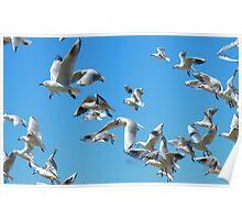 The Sky Dancers - Seagulls - NZ Poster