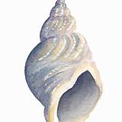 Sea shell I by LisaLeQuelenec