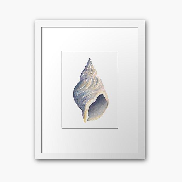 Sea shell I Framed Art Print