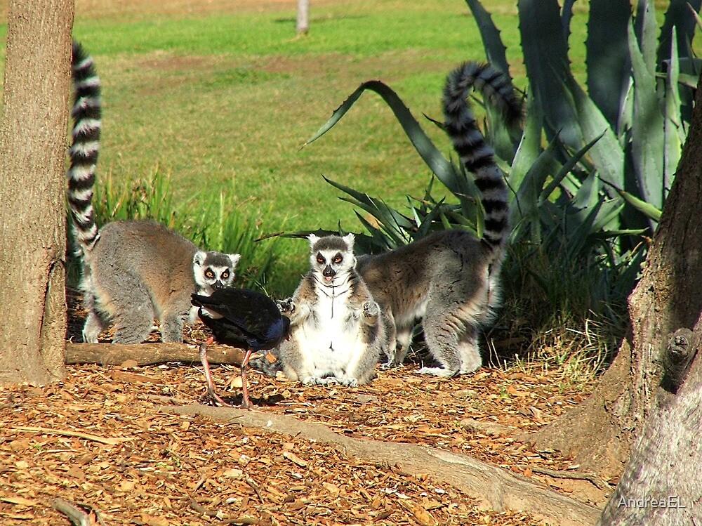 I've Come To Beg Forgiveness King Julien XIII !!! - Lemur