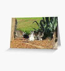 I've Come To Beg Forgiveness King Julien XIII !!! - Lemur  Greeting Card