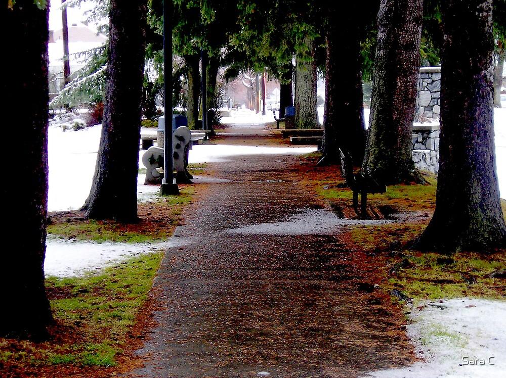 Winter Walk Way by Sara C