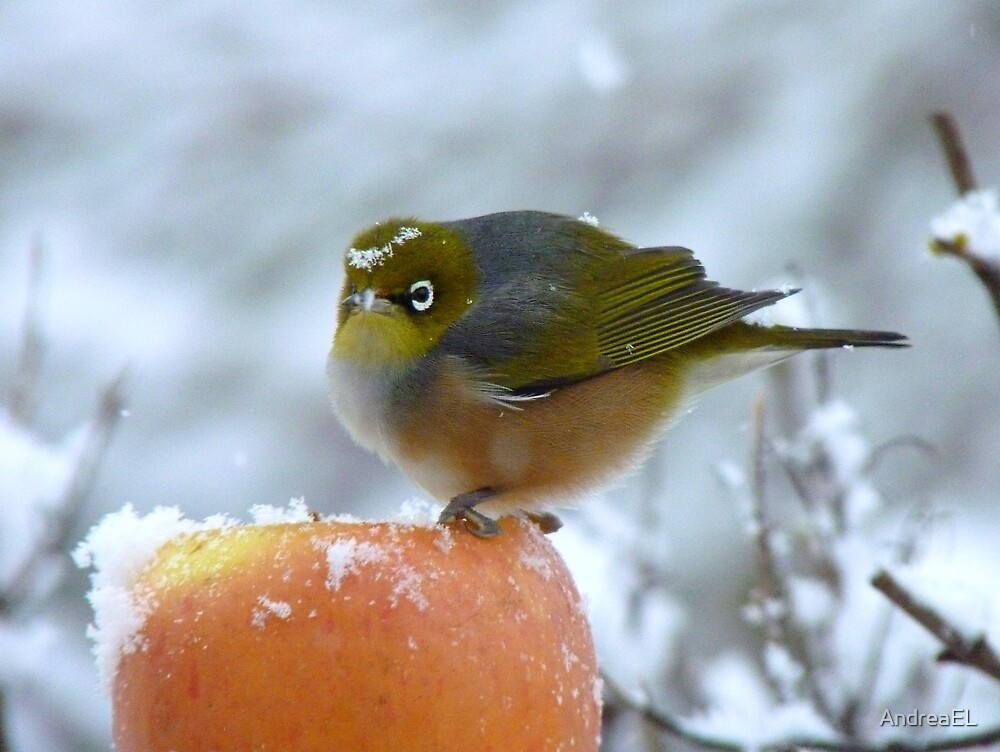 Don't I Look Beautiful With A Snow Crown! - Wax-Eye - NZ by AndreaEL