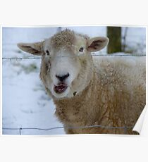 Thanks For Asking..But I Do Have A Woollen Coat!! - Sheep - NZ Poster