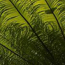 Tropical Green Curves and Diagonals by Georgia Mizuleva