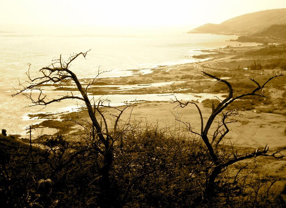 Skeleton Coast by pbeltz